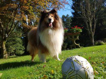Ferienhaus im Wald mit Hund mieten, Alleinlage, Ferienhaus natur