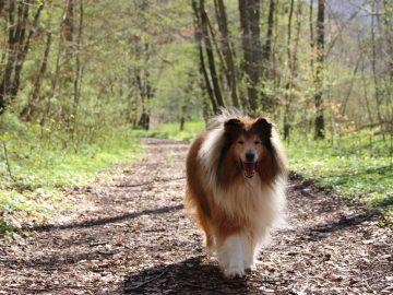 Urlaub mit Hund im Ferienhaus Naturliebe Wald Spazieren gehen mit Hund