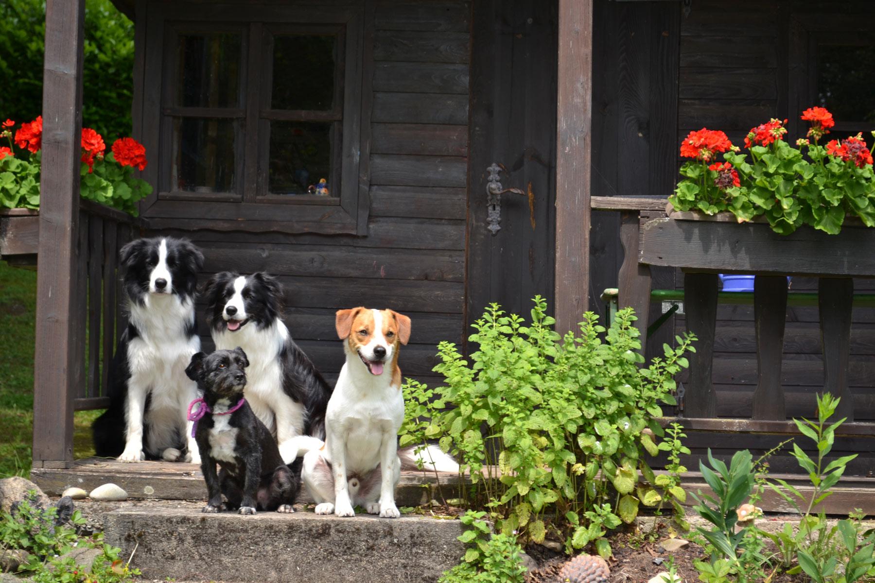 Urlaub mit Hund im Ferienhaus Naturliebe, Ferienhaus mit Hund