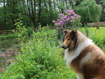Hund am Teich Urlaub mit Hund im Ferienhaus Naturliebe
