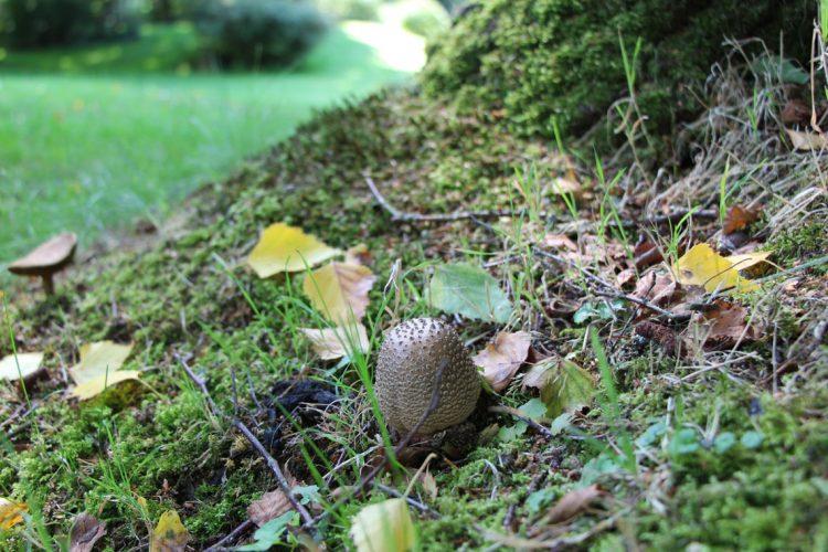 Perlenpilz in Ferienhaus Naturliebe