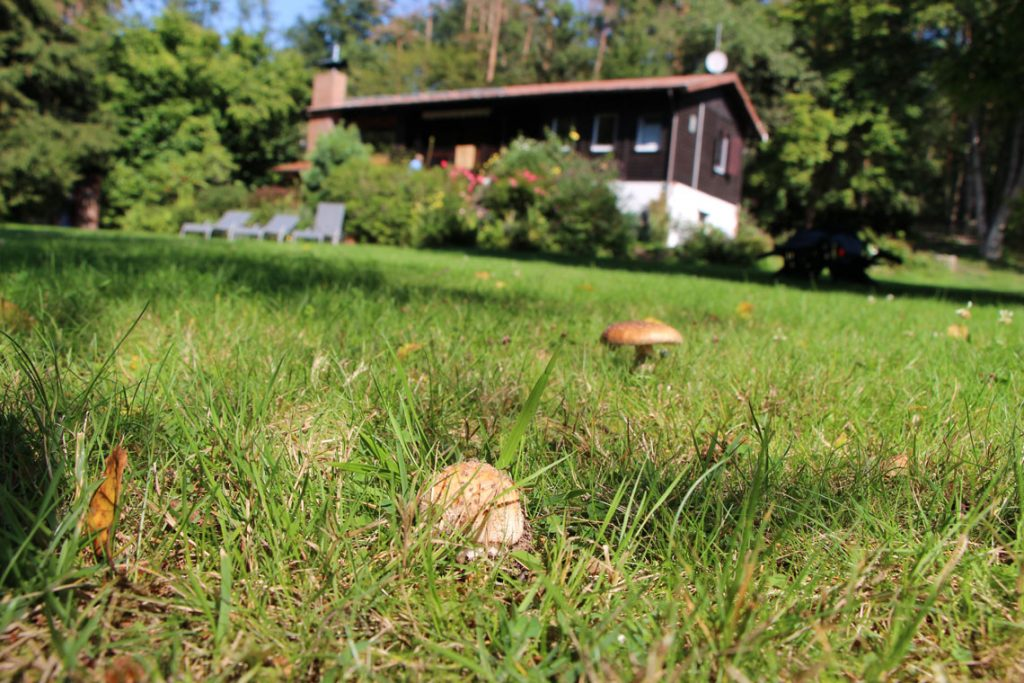 Wer kann schon essbare Pilze im Garten sammeln Perlenpilz