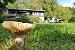 Pilze im Garten von Ferienhaus Naturliebe in Laubach Gonterskirchen bei Schotten im Vogelsberg, Hessen, Deutschland