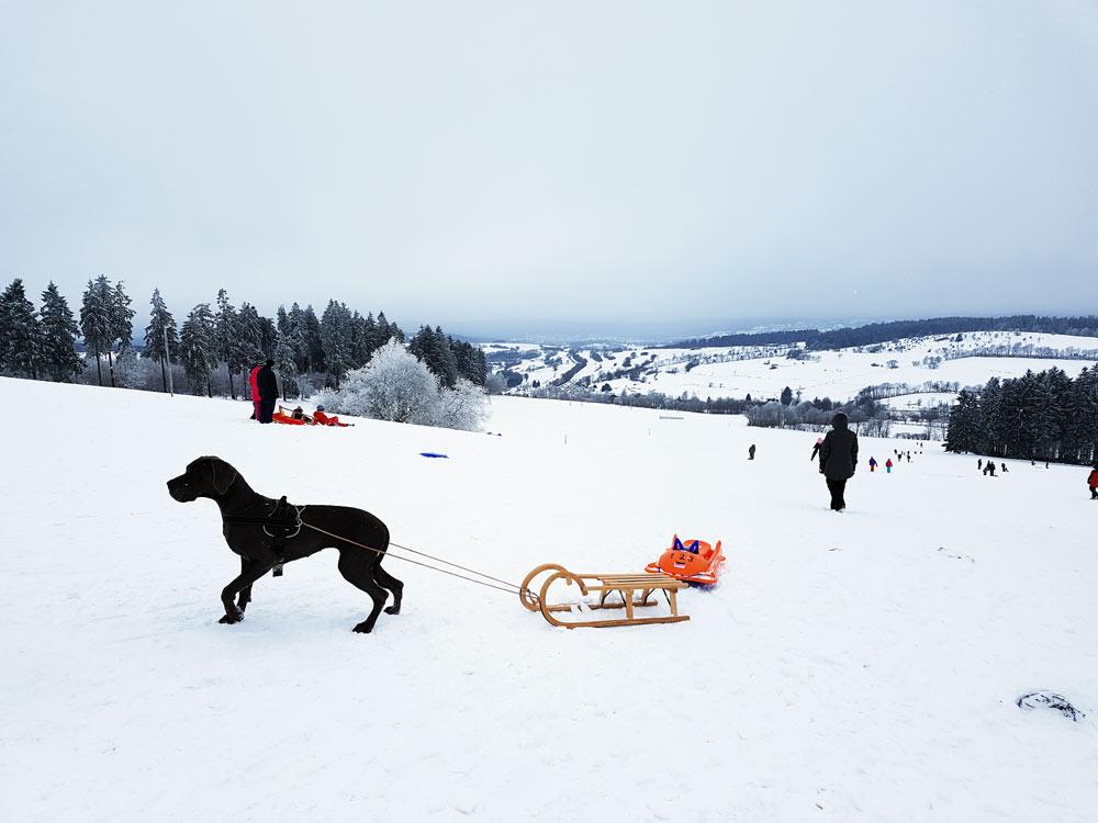Schlittenfahren und Rodeln auf Hoherodskopf mit Hund Breungeshainer Hang Skigebiet, Ski, Schnee, Skifahren in Vogelsberg, Hessen Deutschland