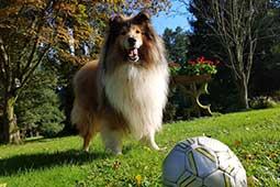 Urlaub mit Hund um Ferienhaus Naturliebe in Laubach Gonterskirchen bei Schotten im Vogelsberg, Hessen, Deutschland