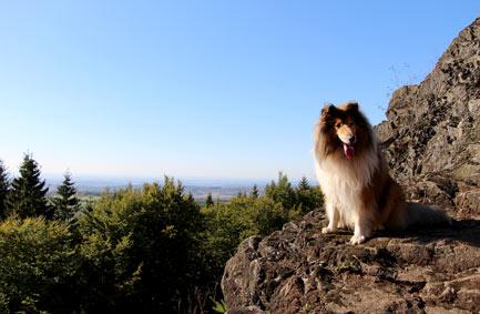 Scotty auf dem Bbilstein Vogelsberg Wanderweg
