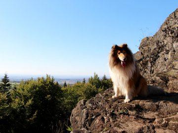 wanderwege im Vogelsberg wandern mit hund