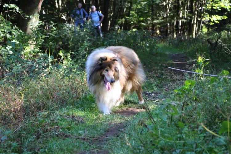 Scotty im Wald bei Gipfeltour Schotten