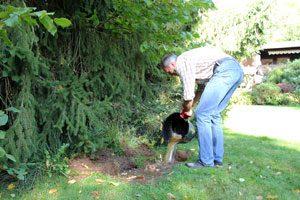 Steinpilzmasse in die Grasnarbe gießen, Steinpilze im Garten züchten