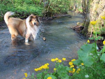 Urlaub mit Hund am Wasser