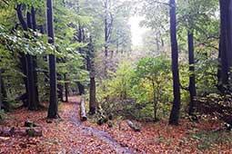 Wandern am Ferienhaus Naturliebe in Laubach Gonterskirchen bei Schotten im Vogelsberg, Hessen, Deutschland