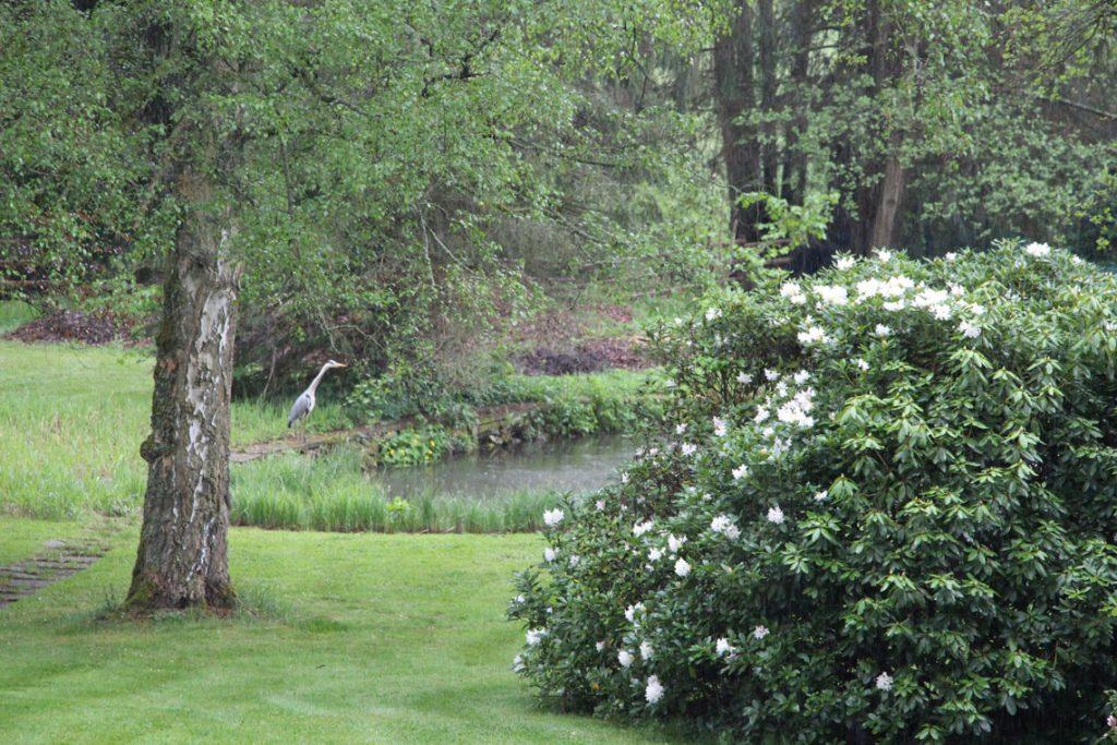 Heimische Tiere im Garten Reiher am Teich im Ferienhaus Naturliebe