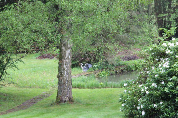 Reiher am Teich im Ferienhaus Naturliebe